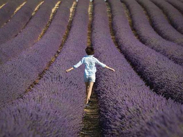 Provence Paca F Ecochard 557x400 1