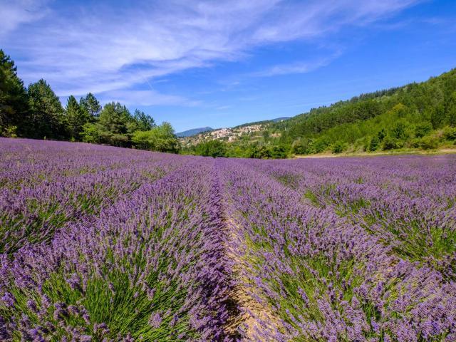 Provence Paca Fotolia 2014 16210