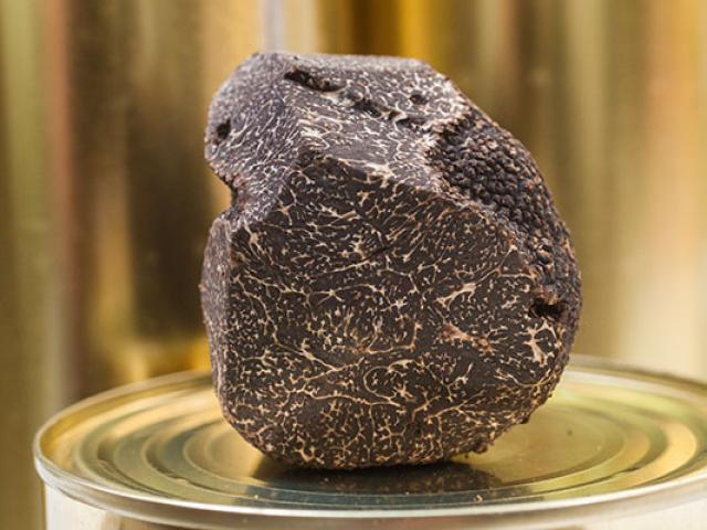 Terroir Truffe Noire Pmarilly