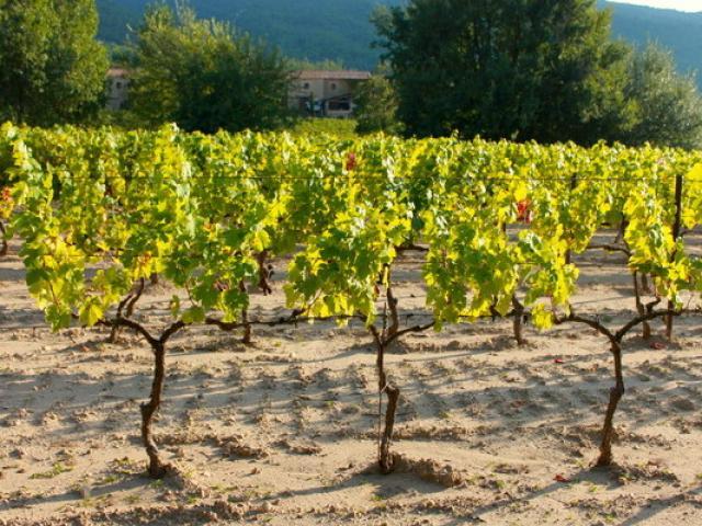Vigne Provence Cchillio