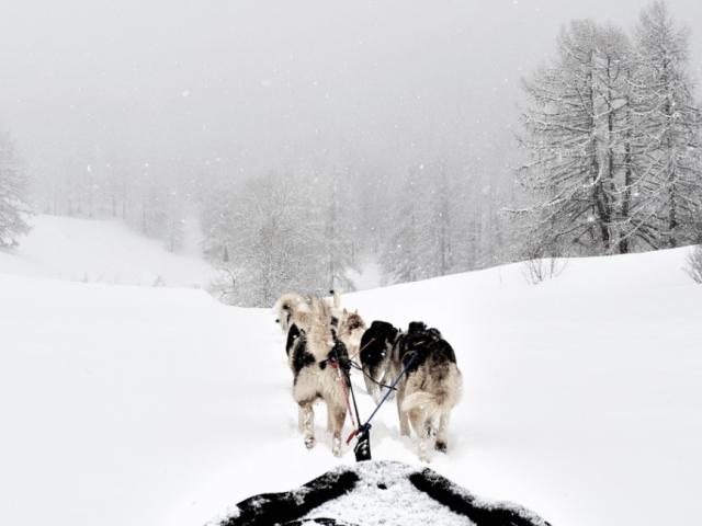 chiens-de-traineau-crevoux-alpes-mdi-duca-12.png
