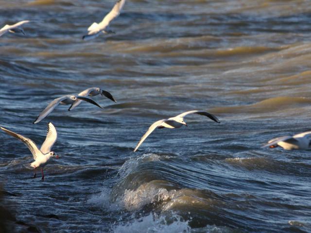 parc-ornithologique-camargue-paca-vinzi-vevrard.jpg