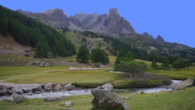 Moutons Val Des Pres Alpes Amouton