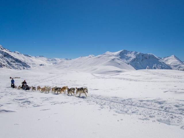 Chiens de Traineaux à Orcières dans les Alpes