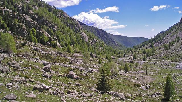 La Gordolasque est un torrent prenant sa source dans le lac de la Fous (2 210 m), en contrebas du refuge de la Federation francaise des clubs alpins et de montagne de Nice. Le lac de la Fous est alimente par les lacs : Long, du Mont Clapier, et Nire. Avant d'atteindre les premieres habitations, ce sont les eaux du lac Autier qui viendront alimenter la Gordolasque, sous les cimes de l'Estrech. D'une longueur de 18.7 Km, il passe au beau milieu de deux hameaux, Les Clots et Saint-Gratien. Le torrent passe a proximite de Belvedere avant de se jeter dans la Vesubie.Le lac de la Fous est exploite par EDF ; une conduite d'eau forcee part de l'ouvrage de retenue pour alimenter la turbine de la centrale au Countet, qui alimente la commune de Belvedere (1 613 m).Les lieux etant en partie contenus dans le perimetre du Parc national du Mercantour, la vallee est parfaitement conservee a l'etat naturel. Un des atouts de Belvedere, reside dans le fait d'etre la deuxieme porte d'acces vers la Parc, avec un acces privilegie sur la vallee des Merveilles.A quelques pas du terminus routier, on trouve un abri de berger en pierres seches. Dans les annees 1960, il a servi au tournage de la saison 1 de Belle et Sebastien, ou il est appele le refuge du Grand Baou. Le Grand Baou et la Demoiselle sont en realite les cimes de l'Estrech, visibles en haut a droite du cliche ci-contre.Au printemps 2009, Jean-Francois Amiguet a tourne un long metrage, Sauvage, avec Jean-Luc Bideau et Clementine Beaugrand. Ce film est egalement tourne aux alentours de l'abri en pierres seches. Il sortira a l'automne 2010.Au fil du temps laisse a l'abandon, l'abri accusait de nombreuses degradations d'origine naturelle (neige, vent...). La communaute de Belvedere a entierement fait renover le site, l'enjeu etant purement patrimonial. La vallee de la Gordolasque est une vallee glaciaire, affluent de la Vesubie et situee au dessus du village de BelvedereElle est bordee au Nord par la crete frontiere avec l'Italie et 