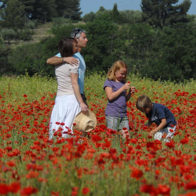 Fleur, printemps, famille, nature, balade
