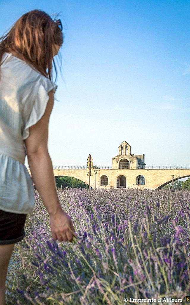pont-benezet-avignon-lavande-provence.jpg