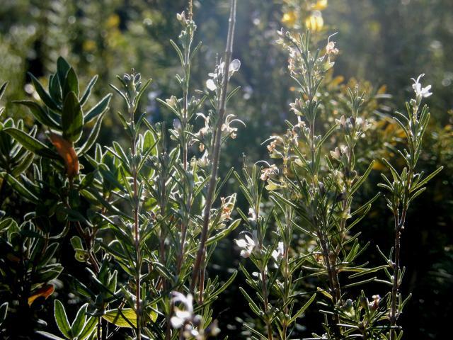 Ecotourisme Plantes M.diduca