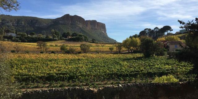 Vignoble à Cassis et Cap Canaille