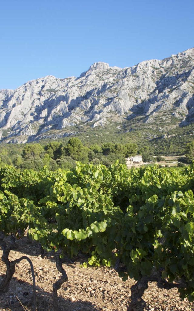 Montagne Sainte-Victoire et vignes