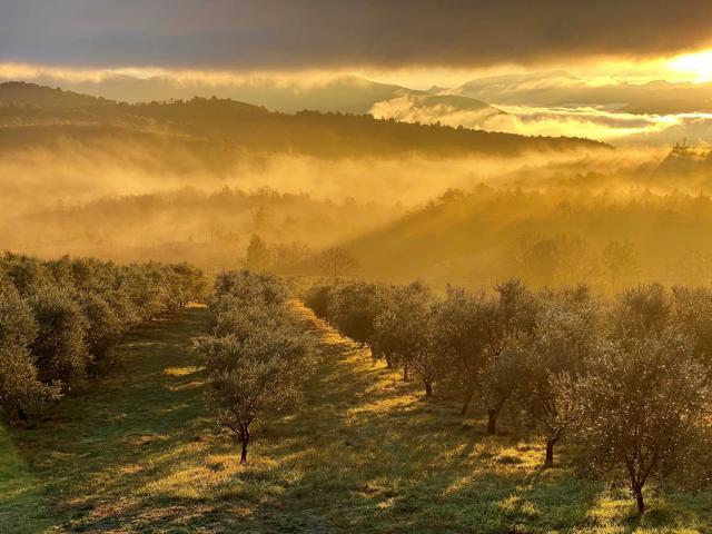 domaine-des-bergeries-de-haute-provence-oliviers.jpg