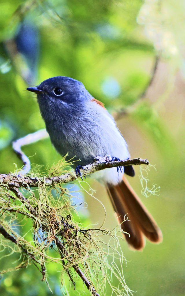 faune_terrestre28_oiseau_la_vierge_-_credit_irt_-_emmanuel_virin_0-e1597761745531.jpg