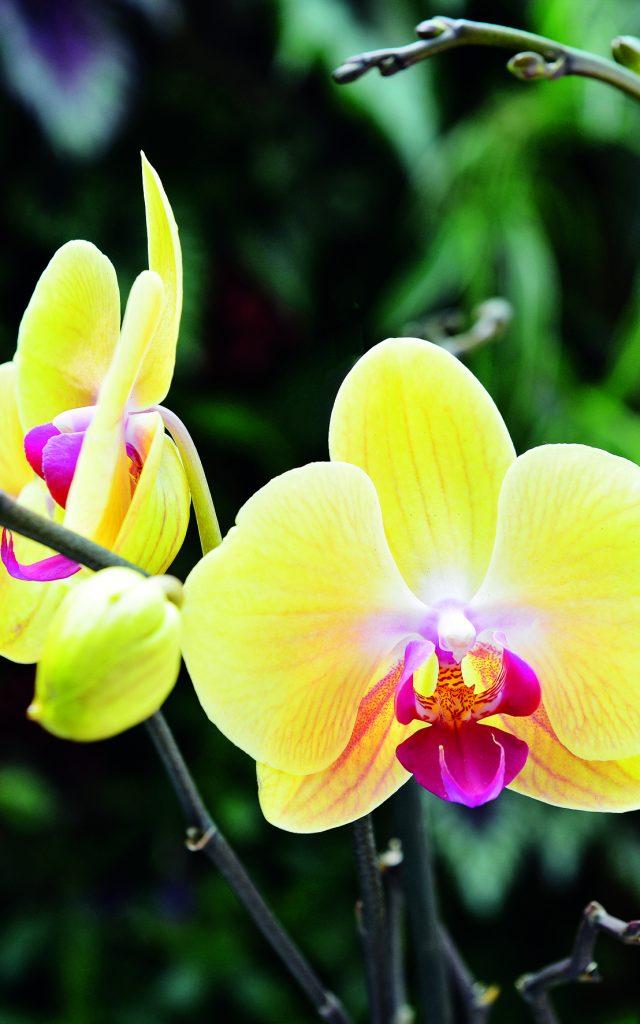 fleurs18_-_credit_irt_-_serge_gelabert_12_2014-e1599550731596.jpg