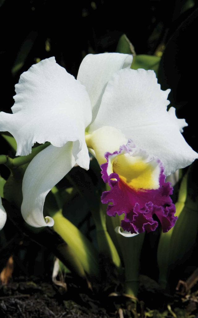 fleurs67orchideeblanche-creditirt-sergegelabertdts122014-e1599550777999.jpg