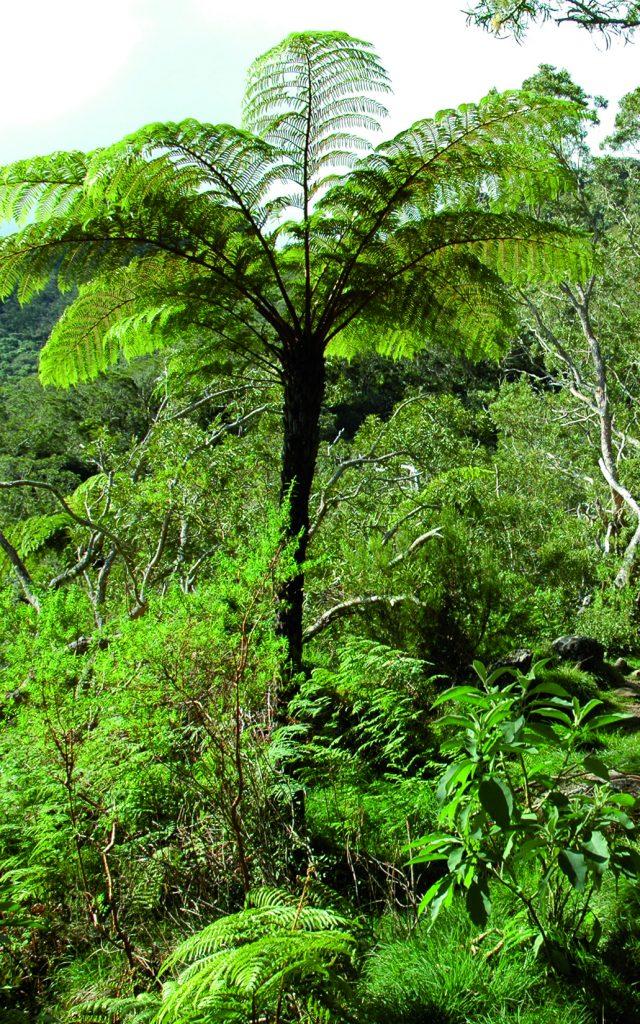 Montagne Mafate, La Réunion