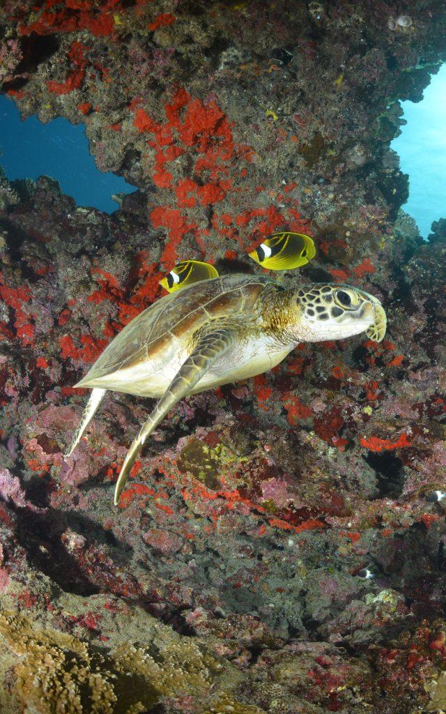 fonds marins La Réunion