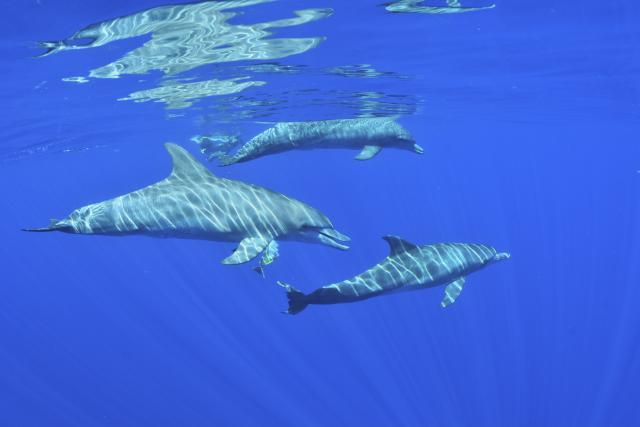 Activités aquatiques à la Réunion
