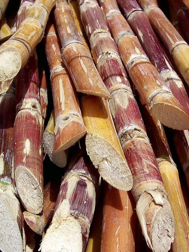 cut_sugarcane.jpg
