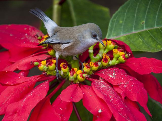 faune_terrestre42_oiseau_blanc_oiseau_lunettes_gris_-_credit_irt_-_yabalex_dts_07_2017.jpg
