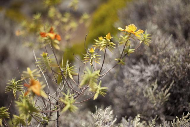 fleurs22-creditirt-cedricetienne.jpg