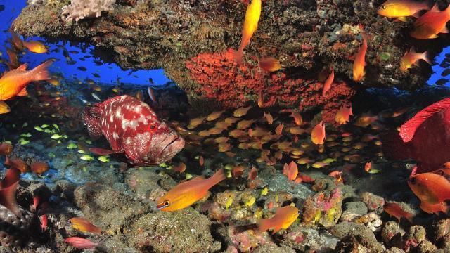 plongée La Réunion