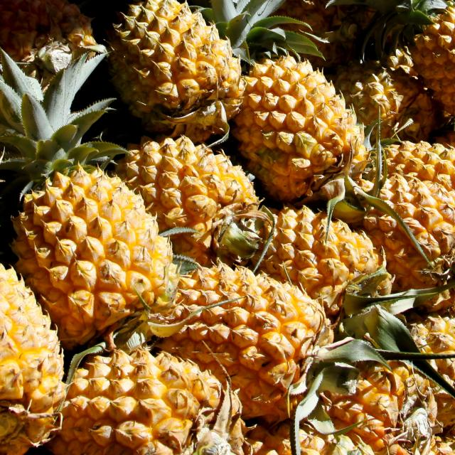 fruits15_ananas_-_credit_irt_-_emmanuel_virin_1.jpg