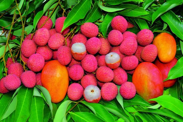 fruits32_letchis_-_credit_irt_-_serge_gelabert_dts_12_2018.jpg