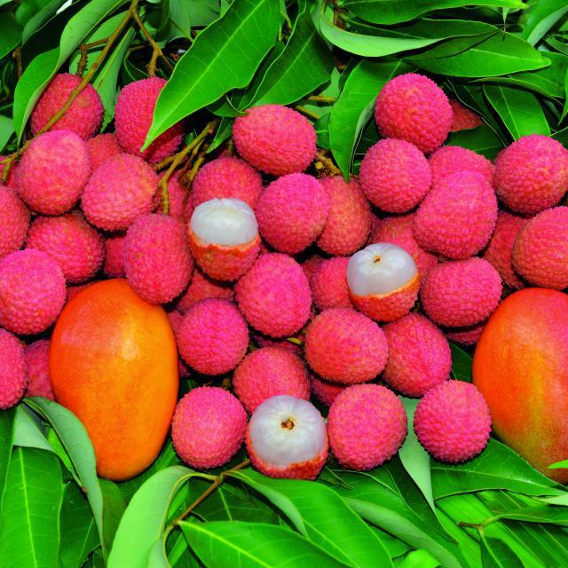 fruits32letchis-creditirt-sergegelabertdts122016.jpg