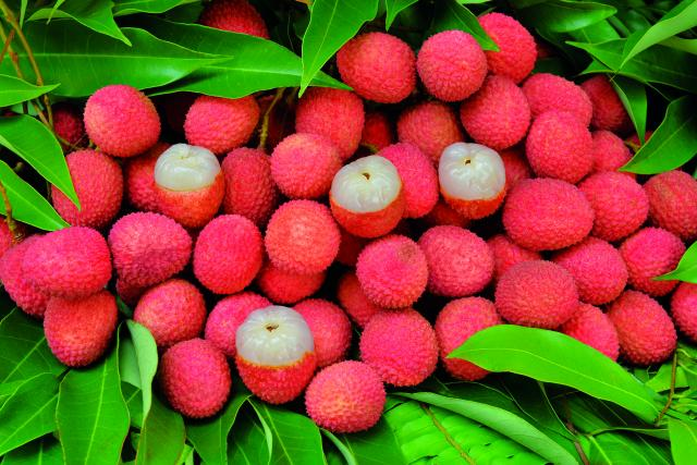 fruits33_letchis_-_credit_irt_-_serge_gelabert_dts_12_2018.jpg