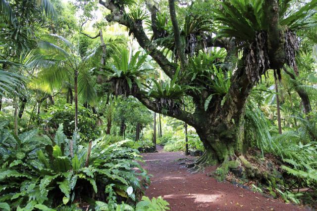 jardin10_des_parfums_et_des_epices_saint_philippe_-_credit_irt_-_emmanuel_virin.jpg