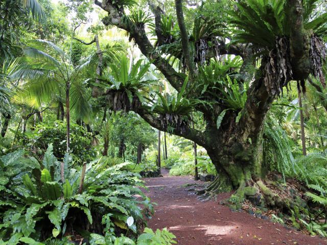Jardin Des Parfums Et Des Epices, La Réunion