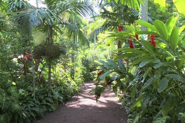 jardin12desparfumsetdesepices-creditirt-emmanuelvirin.jpg