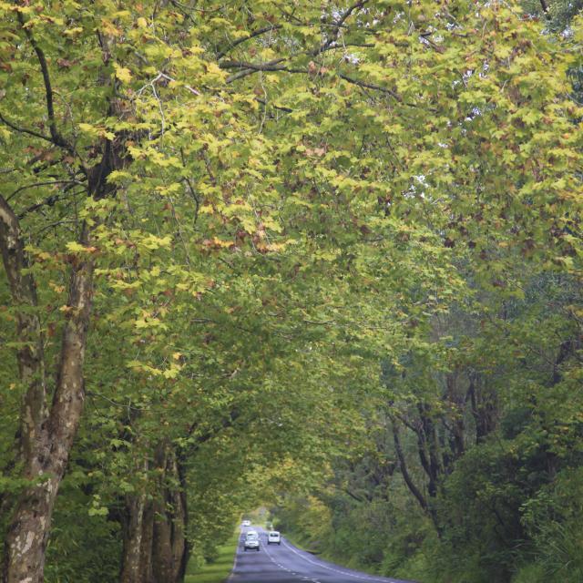 plaine_des_palmistes06_route_des_plaines_-_credit_irt_-_emmanuel_virin.jpg