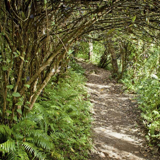 reunion-sentier-vegetation.jpg