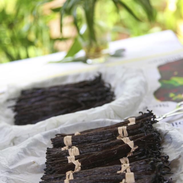 Récolte de vanille, La Réunion