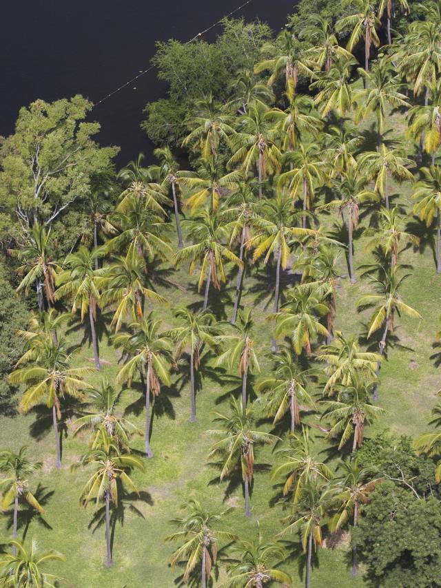 vegetation29cocotiersetangsaintpaul-creditirt-lionelghighidts072017_1.jpg