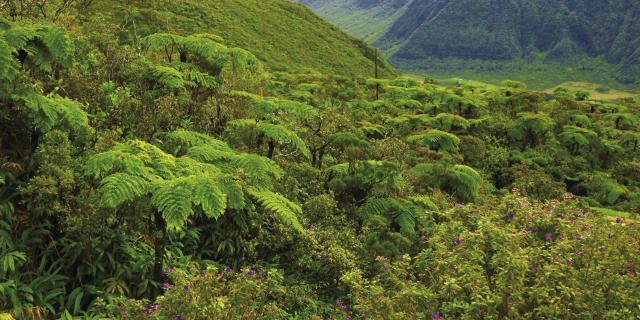 vegetation37_foret_tropicale_-_credit_irt_-_emmanuel_virin_0.jpg