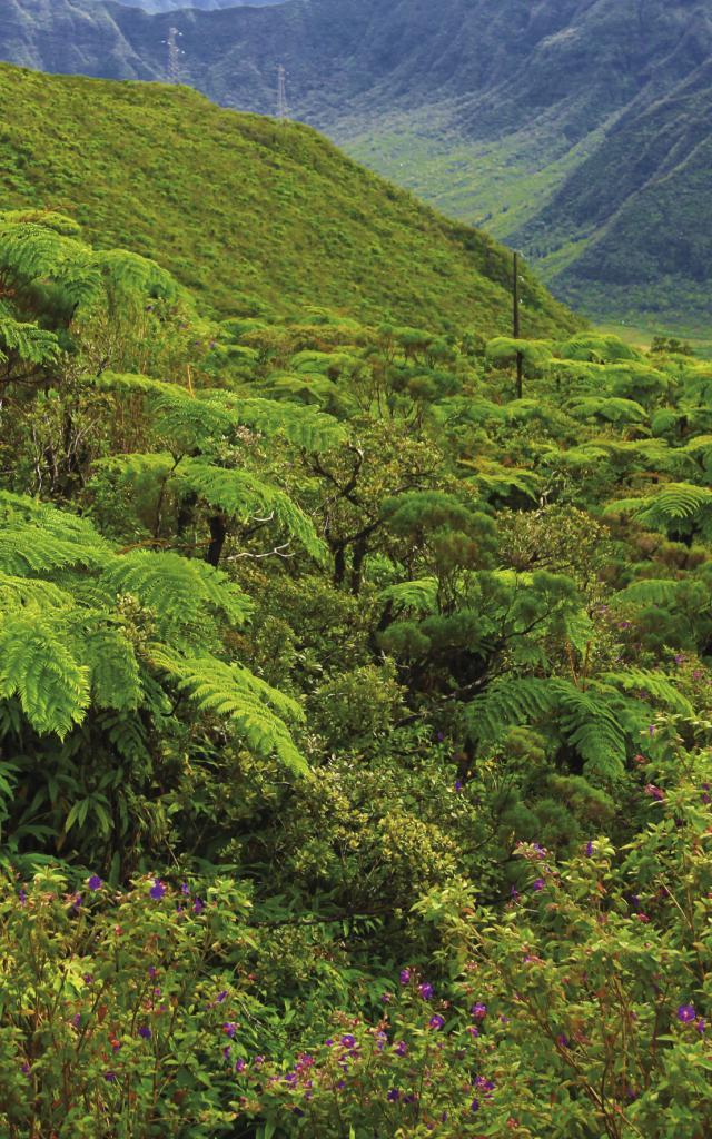 Forêt des Mascareignes