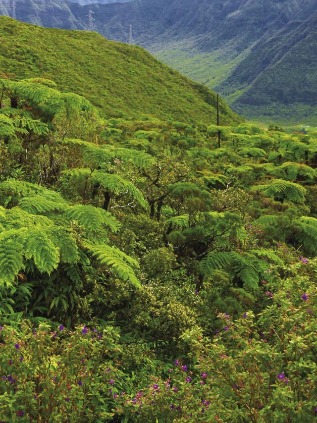 vegetation37forettropicale-creditirt-emmanuelvirin.jpg