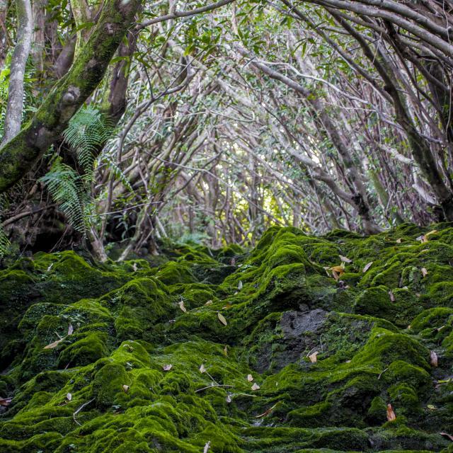 Vegetation59 Ravine Traversant Le Chemin De Ceinture Saint Benoit Credit Irt Yabalex Dts 07 2017.jpg