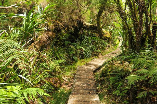 vegetation60_foret_de_bebour_belouve_sentier_ecole_normale_-_credit_irt_-_sebastien_conejero_dts_06_2018.jpg