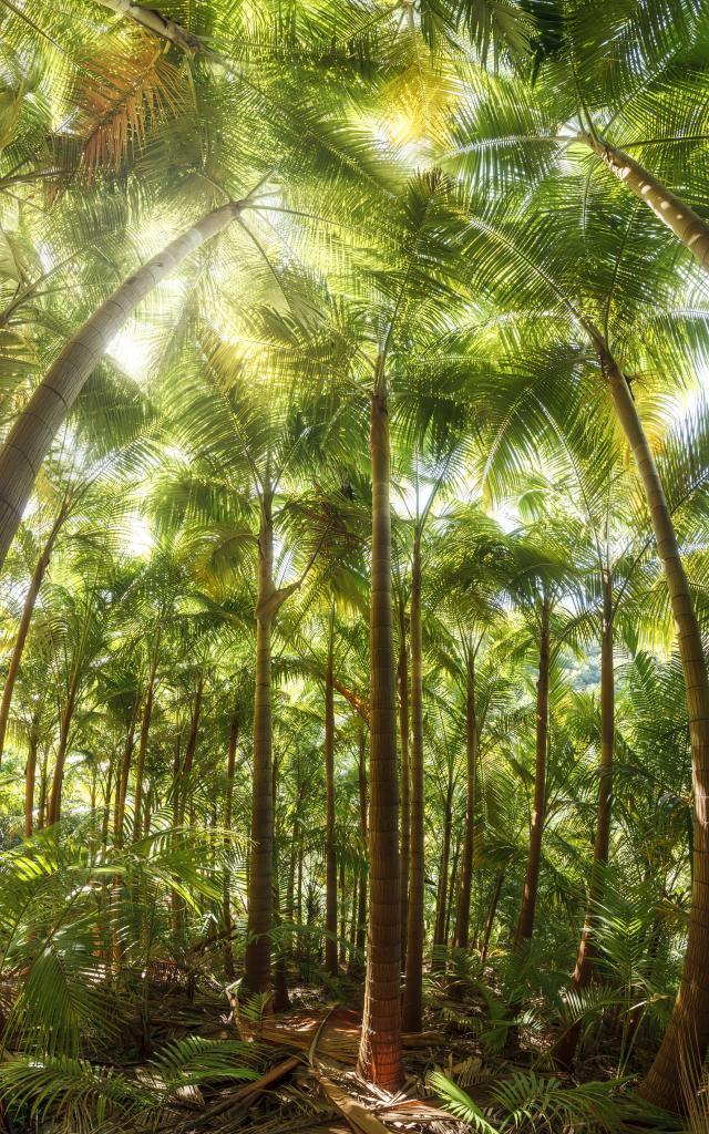 vegetation62foretpalmiste-creditirt-frog974dts122017.jpg