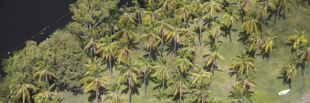 vegetation29cocotiersetangsaintpaul-creditirt-lionelghighidts072017.jpg
