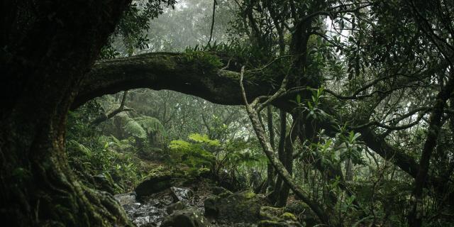 forêt La Réunion