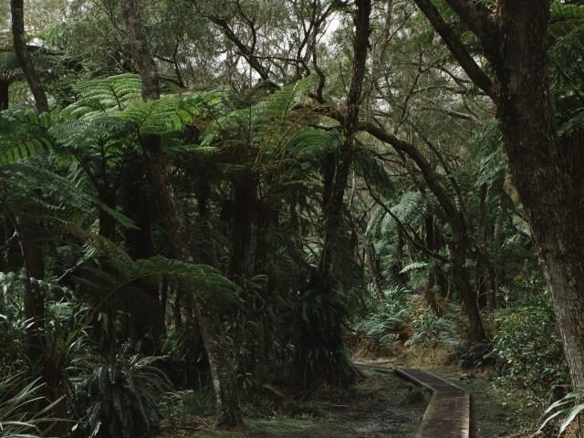 Chemin de randonnée, La Réunion