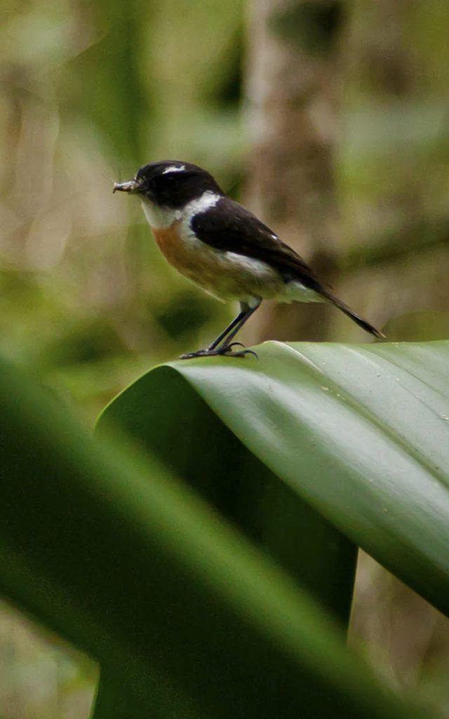 faune-terrestre24-oiseau-credit-irt-cedric-etienne-e1597928093423.jpg