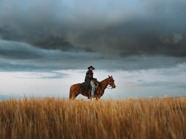 cheval-savane-cap-la-houssaye-credit-buchowsky-vagabonde-dts-web-03-204.jpg