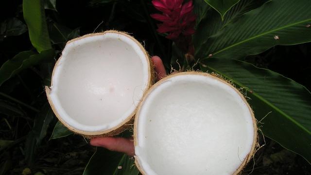 Coco, La Réunion