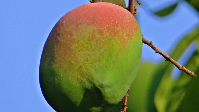 La Mangue de La Réunion