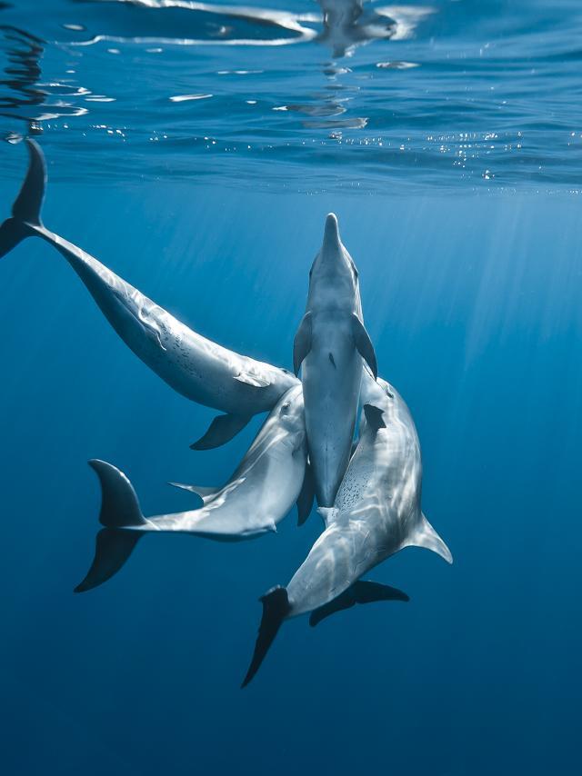 dauphins et baleines à la réunion